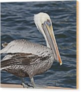 On The Edge - Brown Pelican Wood Print