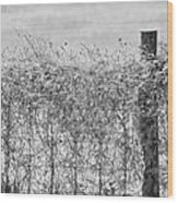 On The Fence Bw Wood Print