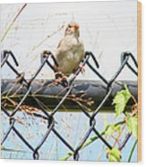 On The Fence Wood Print