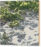 On The Oregon Dunes Wood Print