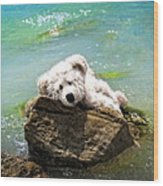 On The Rocks - Teddy Bear Art By William Patrick And Sharon Cummings Wood Print