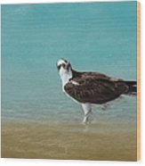 On The Shore - Osprey Wood Print