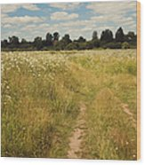 On The Summer Meadow. Russia Wood Print by Jenny Rainbow