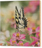 On The Top - Swallowtail Butterfly Wood Print