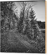 On The Way To Cary Lake Wood Print by David Patterson