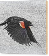 On The Wing - Red-winged Blackbird Wood Print
