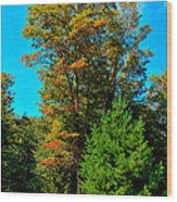 On Top Of Maple Ridge - Old Forge New York Wood Print by David Patterson