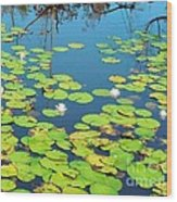 Once Upon A Lily Pad Wood Print