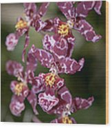 Oncidium Wood Print