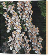 Oncidium Twinkle Fragrance Fantasy Wood Print