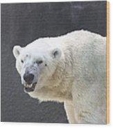 One Angry Polar Bear Wood Print