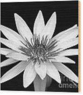 One Black And White Water Lily Wood Print