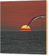 One Black Skimmers At Sunset Wood Print