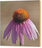 One Coneflower Wood Print