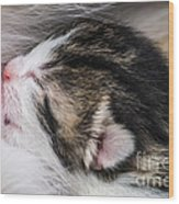 One Day Old Kitten Breastfeeding Wood Print