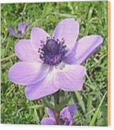 One Delicate Pale Lilac Anemone Coronaria Wild Flower Wood Print