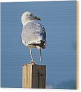 One Foot Seagull Wood Print