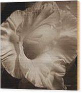 One Gladiola Wood Print