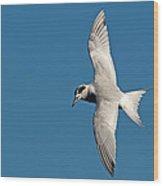 One Good Tern Wood Print
