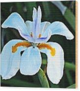 One Irisen Wood Print