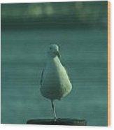 One Legged Sea Gull Wood Print