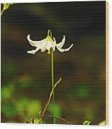 One Lily Almost Alone Wood Print