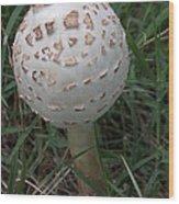 One Little Mushroom Wood Print