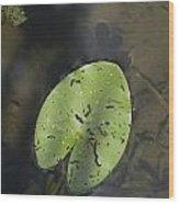 One Of The Leaves Of Nymphaea Alba In Park Presikhaaf In Arnhem Netherlands Wood Print