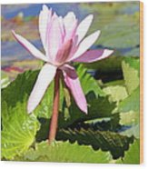 One Pink Water Lily Wood Print