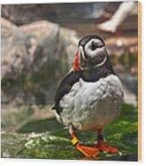 One Puffin Bird Art Prints Wood Print