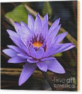 One Purple Water Lily Wood Print by Carol Groenen