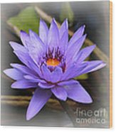 One Purple Water Lily With Vignette Wood Print