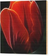 One Red Tulip Wood Print
