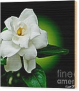 One Sensual White Flower Wood Print by Carol F Austin