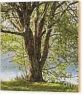 One Spring Tree Wood Print
