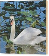 One Swan In The Lilies Wood Print