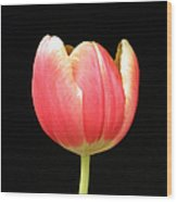 One Tulip Wood Print by Julie Palencia