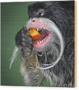 One Very Hungy Emperor Tamarin Monkey Wood Print