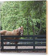 One Very Pretty Hilton Head Island Horse Wood Print