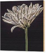 One White Flower Wood Print