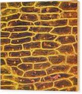 Onion Skin Wood Print by Garry DeLong