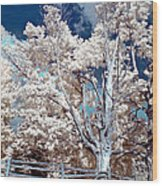 Ontario Summer Color Infrared Wood Print
