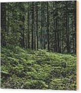 Opal Creek Wilderness Wood Print