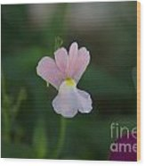Opal Innocence - Nemesia Wood Print