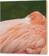 Flamingo With An Open Eye Wood Print