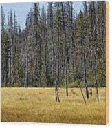 Open Meadow 2 Wood Print