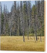 Open Meadow Glacier National Park Wood Print