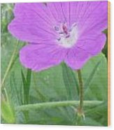 Open Pink Wood Print