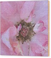 Open Pink Rose Wood Print