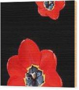 Open Tulip Wood Print